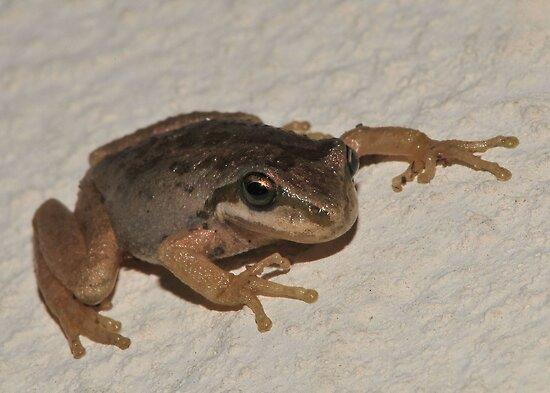 Tree Frog by BluAlien