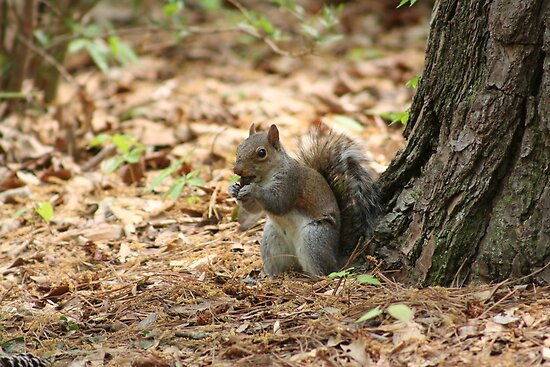 A Little Nutty by DebbieCHayes