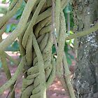 Entwined Roots in Color by Lesley Rosenberg