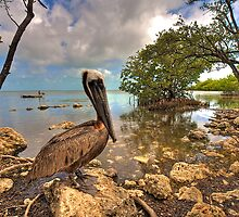Pelican in the Florida Keys by njordphoto