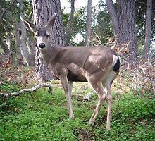 Deer Pose by jdbussone