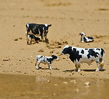 Cows at the beach by Bernie Rosser