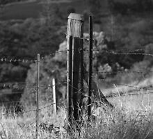 FENCE POST by Colin Van Der Heide