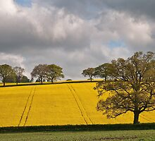 Farmland in Spring by Steve  Liptrot