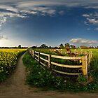 Oilseed Rape field by DavidKennard