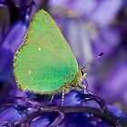 Green Hairstreak by Neil Bygrave (NATURELENS)