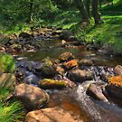 Padley Gorge, Peak District National Park, UK by AntonyB