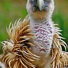 Griffon vulture by TaniaLosada
