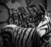 Donkey - Tijuana, Mexico - 2007 by Arturo Rubio