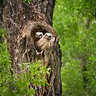 Great-Horned Owlets in Gros Ventre Campground by cavaroc