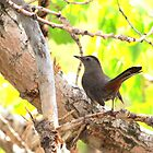 Gray Catbird by Alyce Taylor