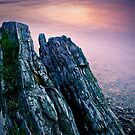 Ocean Timber by Appel