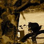 Squirrel on a Tree in London by serepink