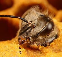 bee hatching x3 by Scott Thompson