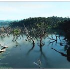 flooded mangroves by dshones