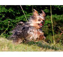 """""""Run Ash, Run"""" Photographic Print"""
