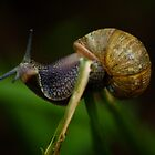 snail by lurch