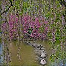 The Swans & The Weeping Cherries  by Chris Lord