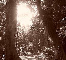 Jardim Botanico by Anna-Lisa Wilson