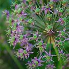 Purple Flower Ball by Geraldine Miller