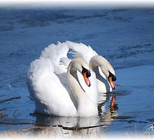 Swan Love by Mattie Bryant