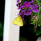 Springtime by AnneRN