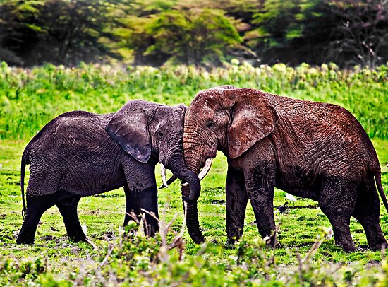 Elephant Hug - Amboseli National Park - Kenya by Scott Ward