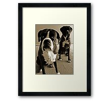 What do you mean she's right behind me .... -Boxer Dogs Series- Framed Print