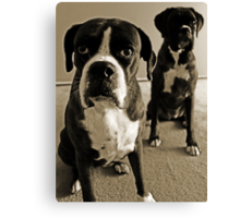 What do you mean she's right behind me .... -Boxer Dogs Series- Canvas Print