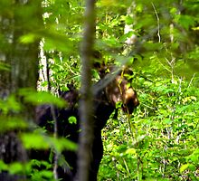 Put the camera down and I'll come out ! by Greg Boan