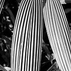 Palm Stripes by Catherine Davis