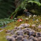 the lonely toad by Richard Hardy
