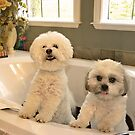 Bath Tub Party  by Judy Grant