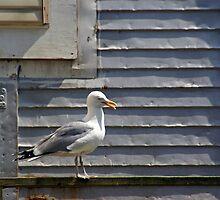 A Gull's Position by Lynda Lehmann