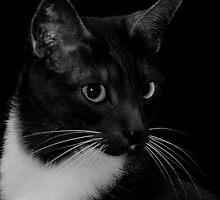 Smokey in B&W by Marjorie Wallace