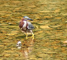 Tri color Heron by Rick  Friedle