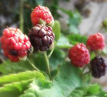 Raspberries 1 by Christopher Johnson