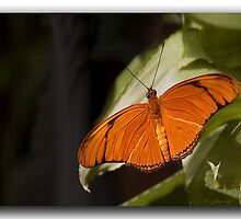 Sunbathing Butterfly by John44
