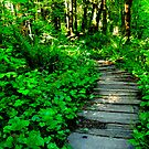 Forest Boardwalk by Jay Morgan