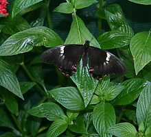 butterfly on bush by wolf6249107