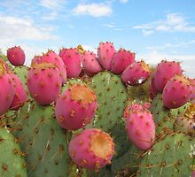Opuntia Cactus, Santa Ana Riverbed by Maggie Woods