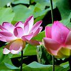 Lotus II by Elizabeth Rose Rawlings
