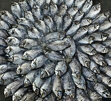 Fish Circle by Glen Allison