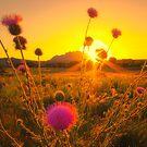 Sun...Flower by Bob Larson