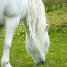 White Pony by eithnemythen