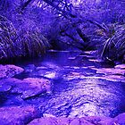 Purple Twilight - Ellensbrook by Dennison