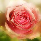 La Rosa by Danuta Antas