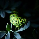 Caterpillar in the light by Luís Lajas