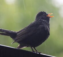 Singing in the rain by DutchLumix