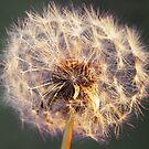 BlowBall by newfan